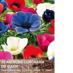 Anemone De Caen Mixed Spring Bulbs 15 Per Pack