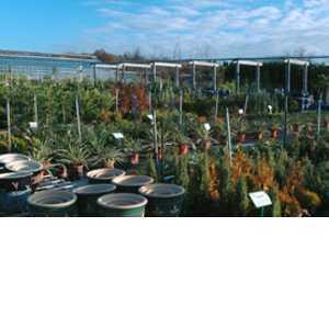Garden Centre Information