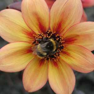Bee's & Bug's